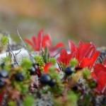 Herfstkleuren Lofoten Noorwegen
