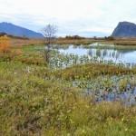 Herfstkleuren op de Lofoten, Noorwegen