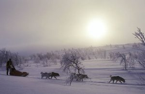 Husky's Finnmark, Noorwegen, Fru Amundsen