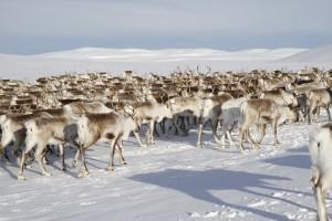 © foto Tromsø Lapland