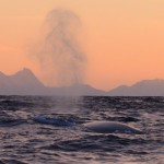 Blowhole, walvissafari, Noorwegen
