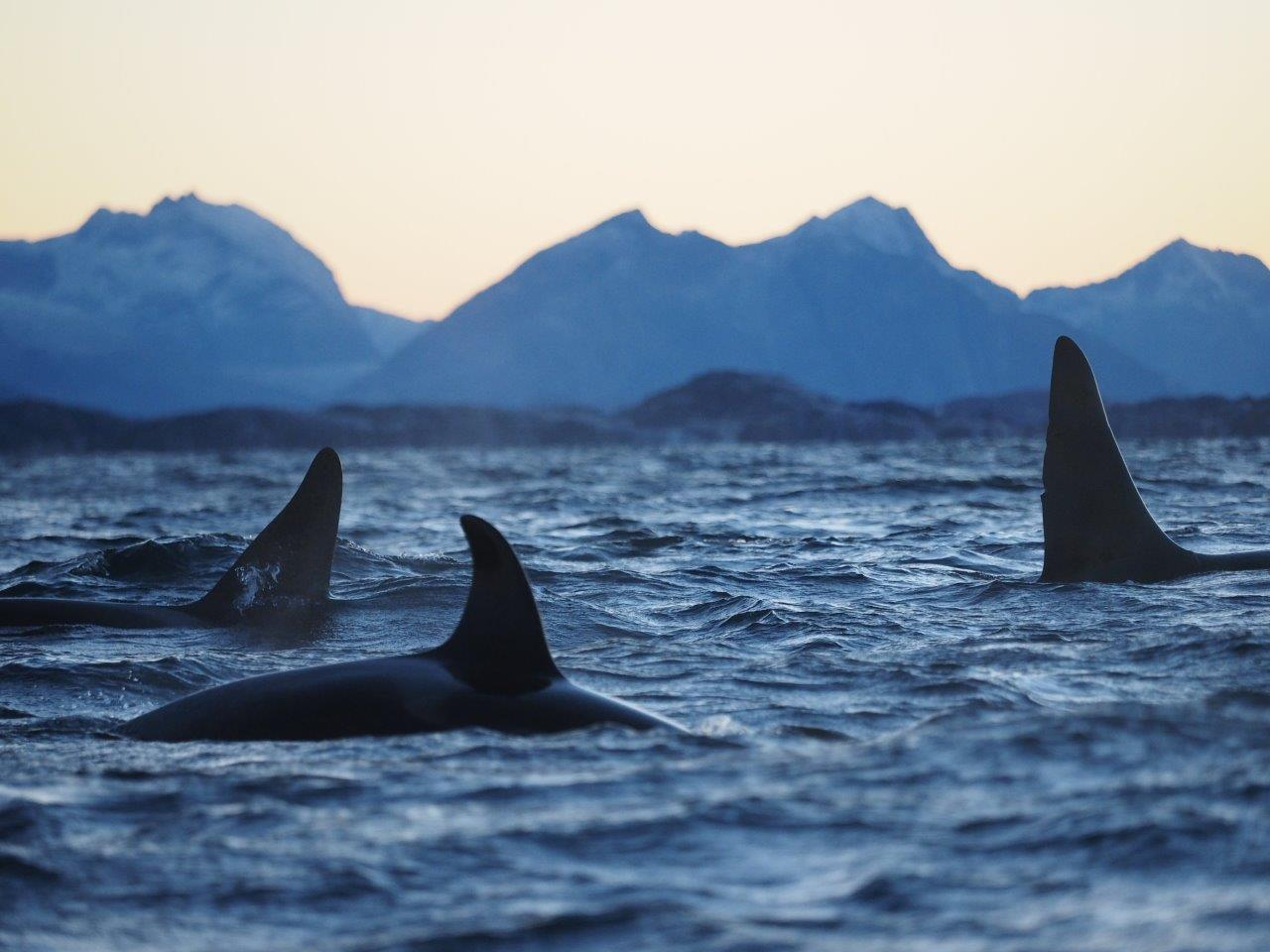 Zeilreis Noord-Noorwegen: Aurora Borealis & Walvissen